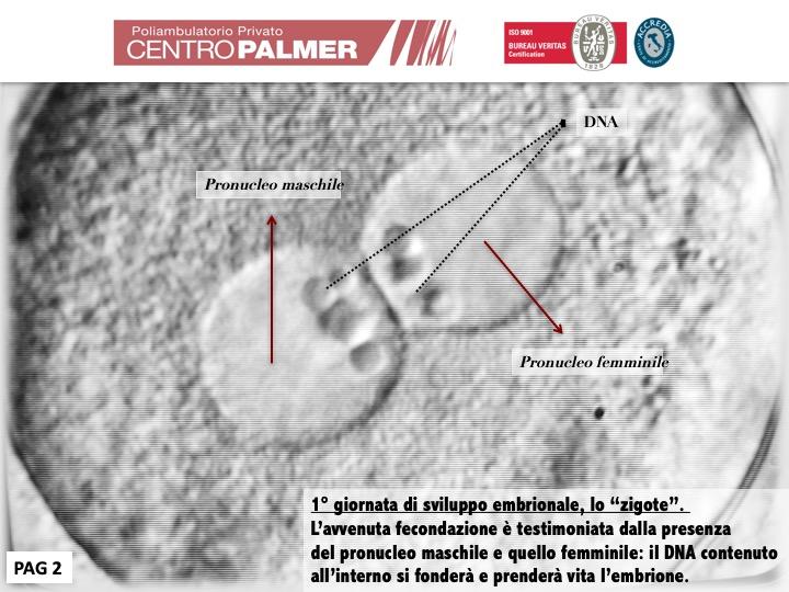 Post Lo Sai Che...Fecondazione Diapositiva 2 - Centro PMA Palmer