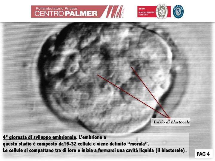 Post Lo Sai Che...Fecondazione Diapositiva 4 - Centro PMA Palmer