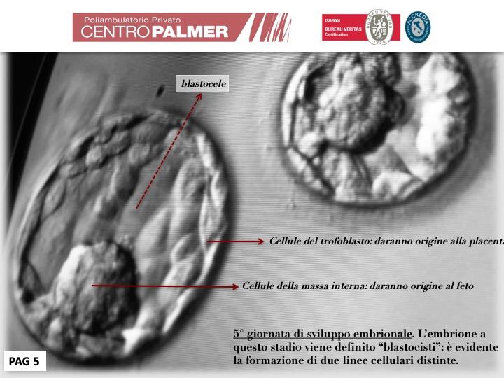 Post Lo Sai Che...Fecondazione Diapositiva 5 - Centro PMA Palmer