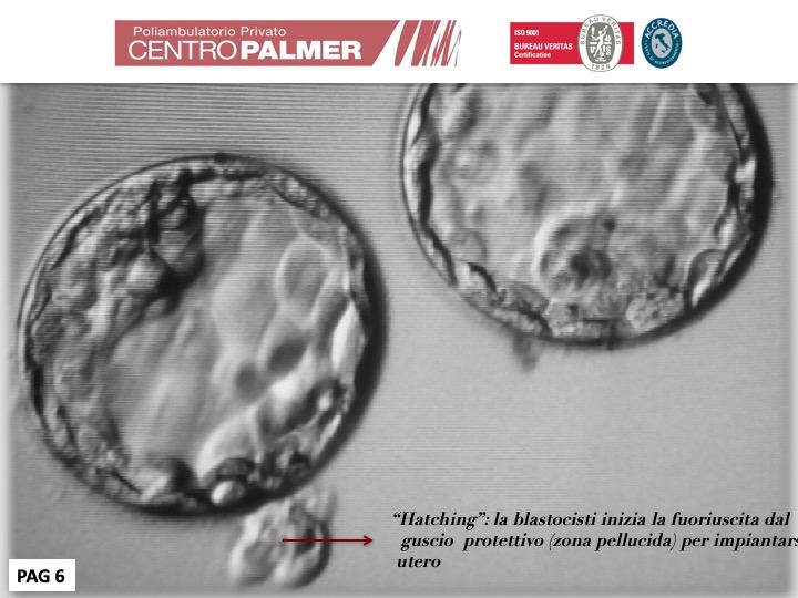 Post Lo Sai Che...Fecondazione Diapositiva 6 - Centro PMA Palmer
